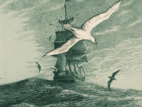 Aquatic Fiction