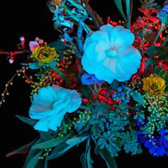 Move: Botanical Fascination