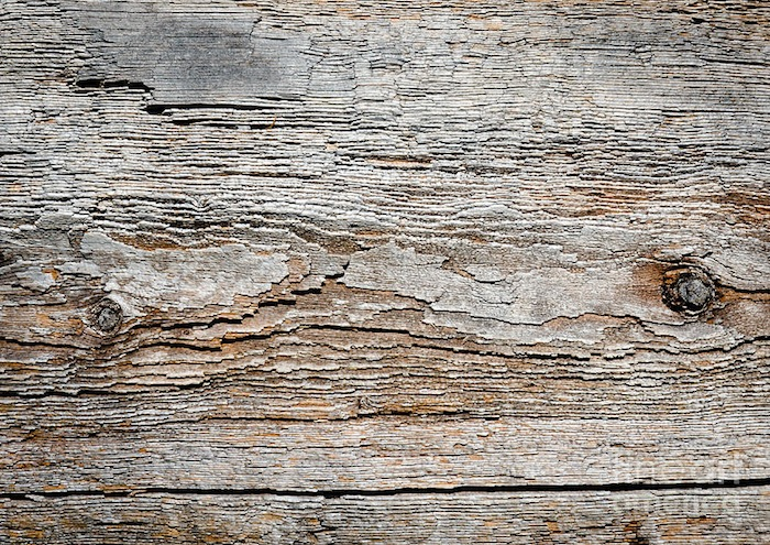 digital-bark-texture-as-if-digitised-contours-on-natural-wood-andy-smy