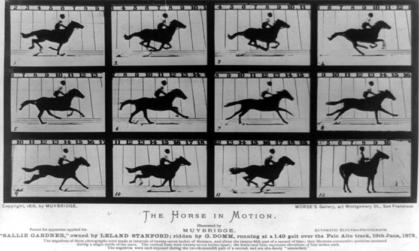 Vivid: The Evolution of Animation
