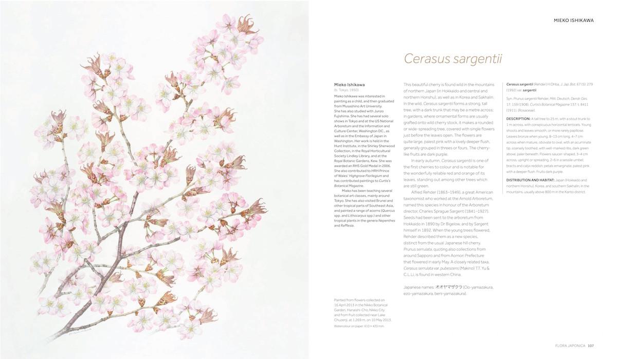 flora-japonica-2