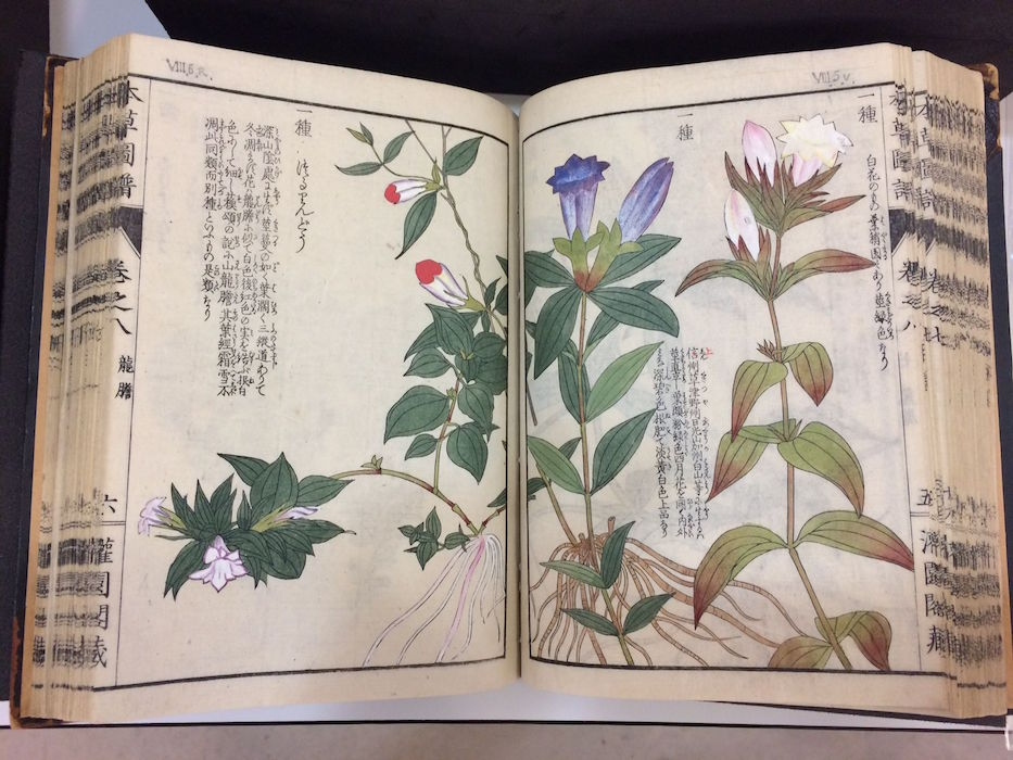 honzo-zufu-illustrated-manual-of-medicinal-plants-iwasaki-kanen