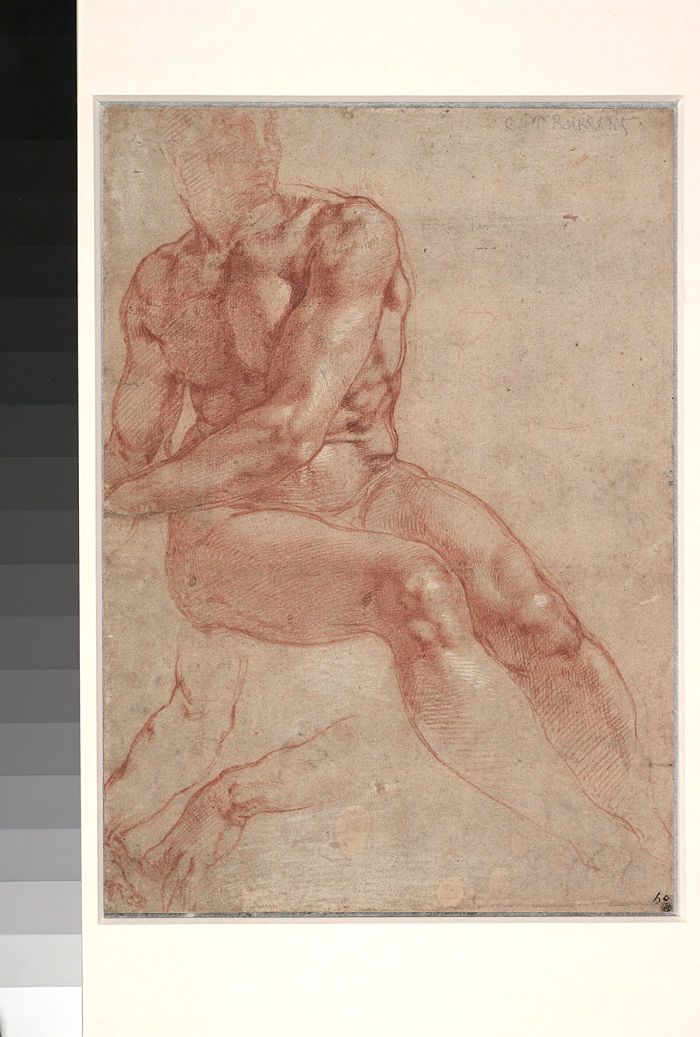 Study for Ignudo [front]; Study of Hands for the Pietà [back],