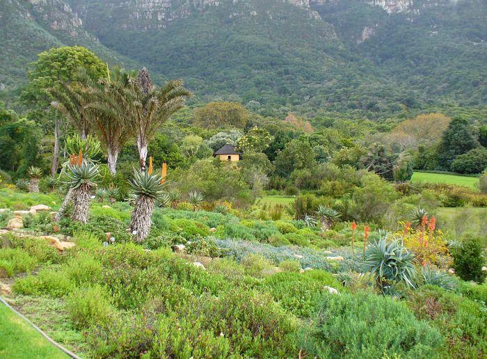 View_Kirstenbosch_Gardens_opt