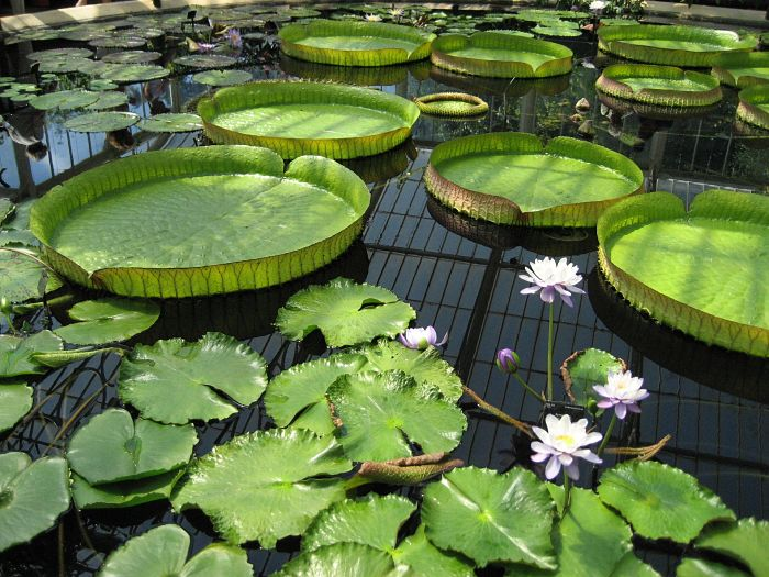 lily-pad-500600_1920_opt