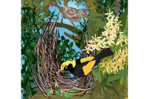 The Magic of Bowerbirds