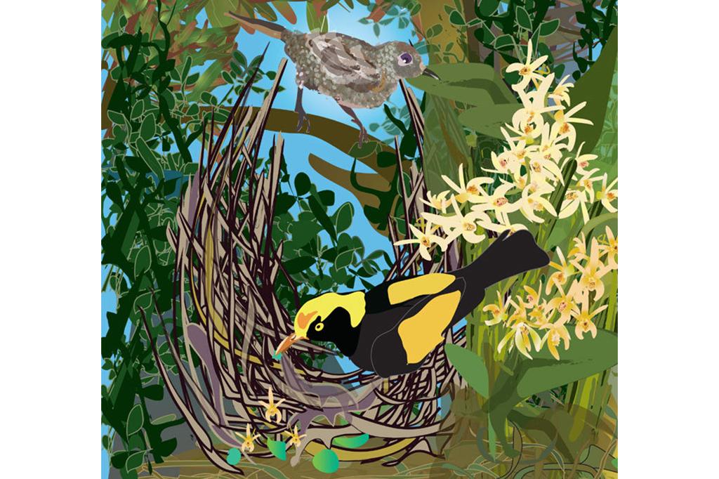 male regent bowerbird resize