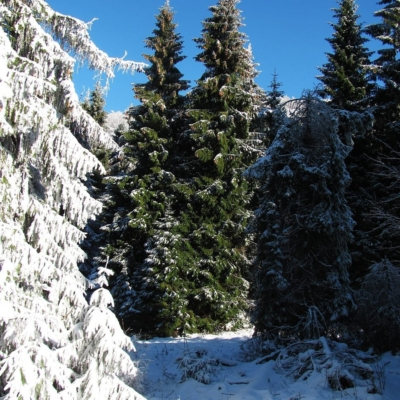 How to be more Environmentally Conscious this Christmas