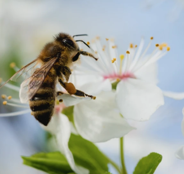 Uniform; The Healing Bee