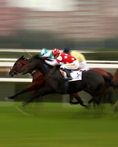 Horse-Race