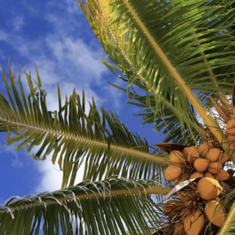 The Joy of Coconut
